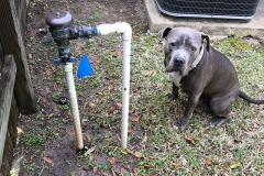 lawn sprinkler repair katy tx8